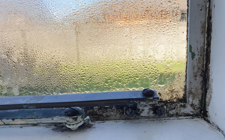 Mould in Christchurch Home